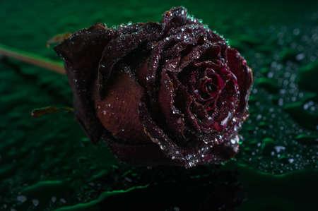 rose, fresh, water, movement, cosmetic