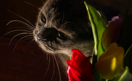 cat and flowers portrait blue russian tulip celebration happiness smile