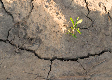 Plant in dried cracked mud desert, plant, dry, crack,
