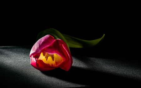 Levitating purple tulips against old concrete background water splash fresh movement drops Imagens - 101147283