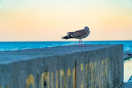 albatross seagull on the sea pier. background nature, ocean, pier, resort, sea seagull Imagens