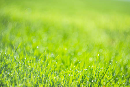A green field of grass in drops of dew Imagens