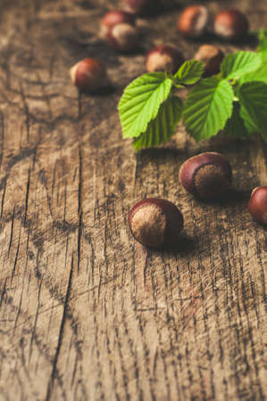 Hazelnuts and branch on wooden background