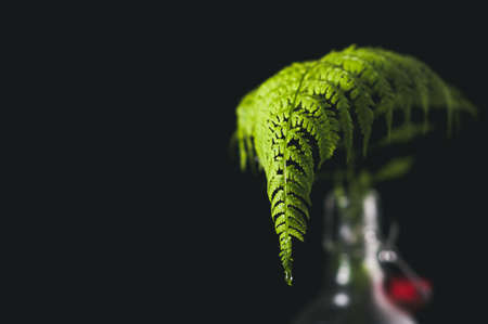 Leaf of a fern in a bottle with water. A still life on a black background
