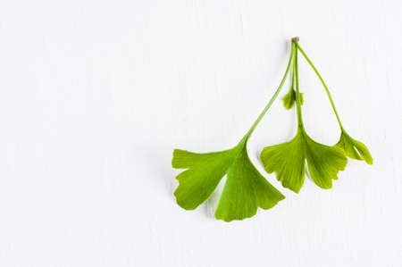 Leaves of the Ginkgo tree isolated on white background Stock Photo
