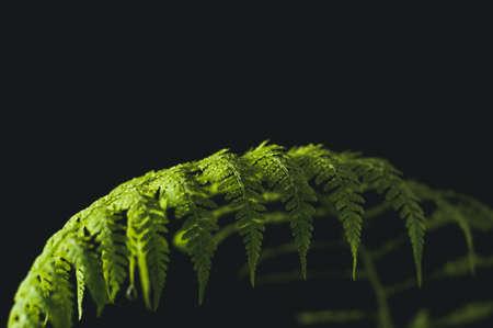 黒の背景にシダの葉