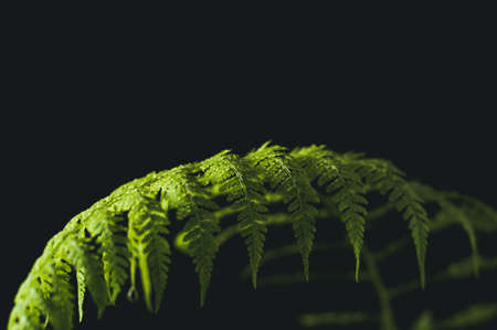 ware: Leaf of a fern on a black background