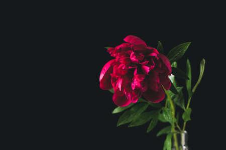 水をボトルに赤牡丹。黒の背景上の静物