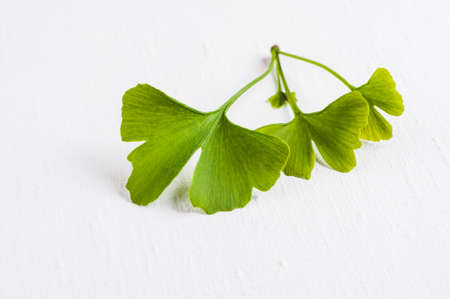 Leaves of the Ginkgo tree isolated on white background Zdjęcie Seryjne