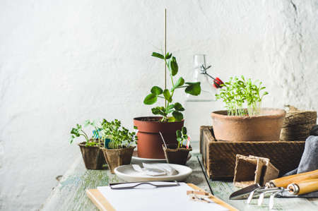 Sprouts in a pot, seeds and garden tools on a wooden table against the background of a white wall