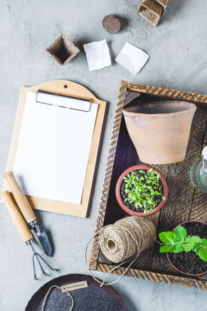 Sprouts in a pot, seeds and garden tools on a gray concrete background Stock Photo