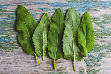 Sage leaves on an old wooden table. Flat lay and top view
