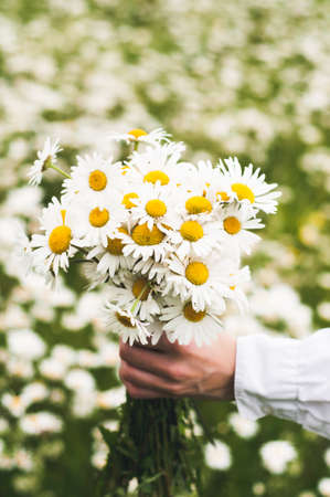 The woman in white clothes with a bouquet in her hand in the field of camomiles Stock fotó - 83100094