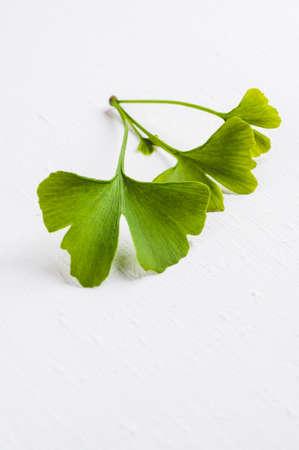 흰색 배경에 고립 된 은행 나무의 잎