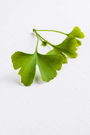 Leaves of the Ginkgo tree isolated on white background Banco de Imagens