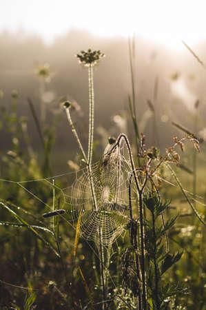 Wild gebiedsgras bij zonsopgang. Natuur of ochtendconcept Stockfoto