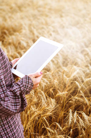 The woman farmer with the tablet PC in hands in the wheat field