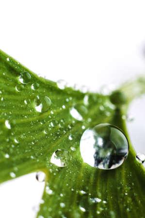 물 방울은 나무의 녹색 잎에 닫습니다. 매크로 사진