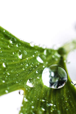 Water drops close up on green leaves of a tree. Macro photo Banco de Imagens