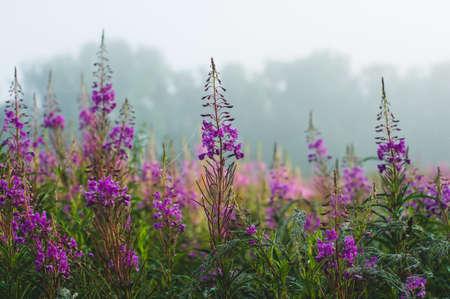 Ochtendlandschap en rode wilde bloemen Stockfoto