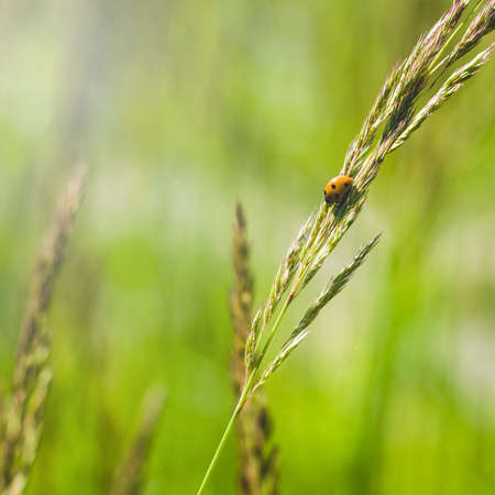 Bug on a grass in sunlight. Concept of the nature 版權商用圖片