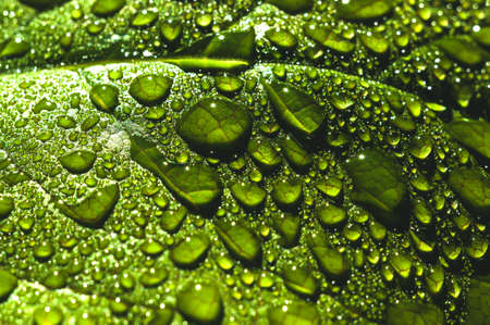 Water drops close up on green leaves of a tree. Macro photo Stock Photo