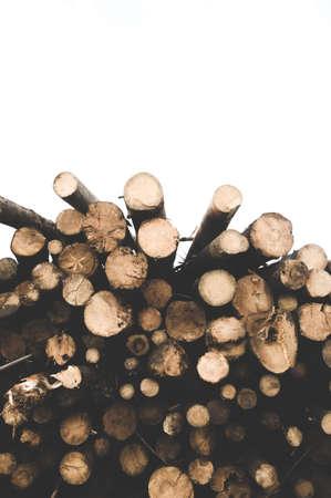 Tree trunks on white background Stock fotó