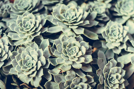 Background of succulents