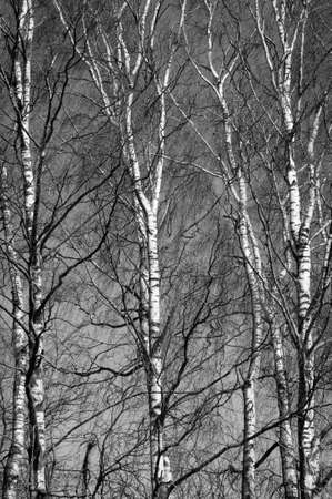 Nature in black and white variant Stock fotó
