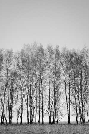 Nature in black and white variant 版權商用圖片