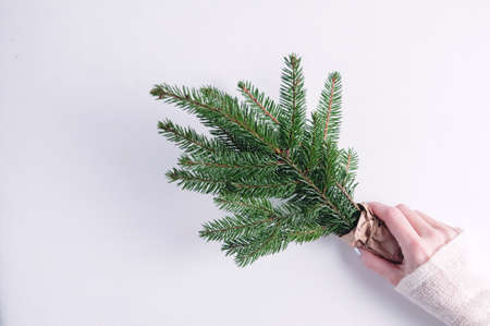 Woman holds in her hands the spruce branches. Christmas concept Stok Fotoğraf
