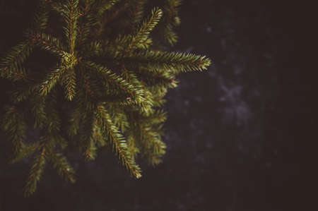 Fir branches on a dark background. Christmas decorations