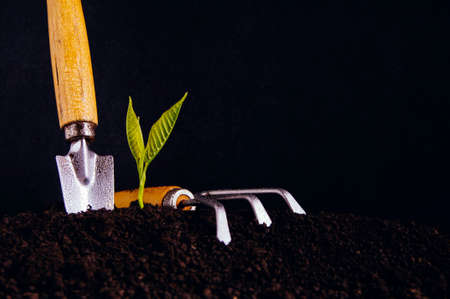 Young sprout in the garden. Concept of growth or achievement