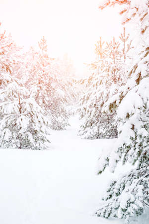 Winter landscape in the coniferous forest