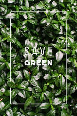 Green background Фото со стока