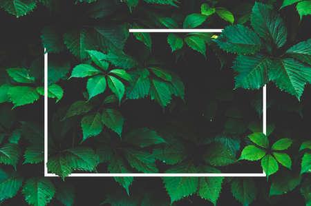 Green leaf background and white frame