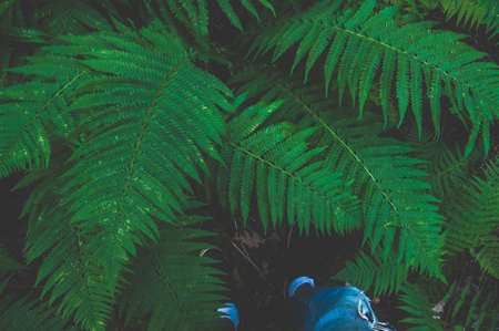 Feet in fern leaves. Point of view