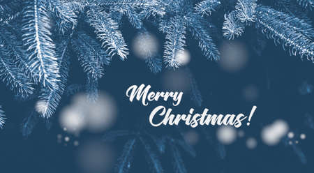 Spruce branches and text Merry Christmas! on a dark background