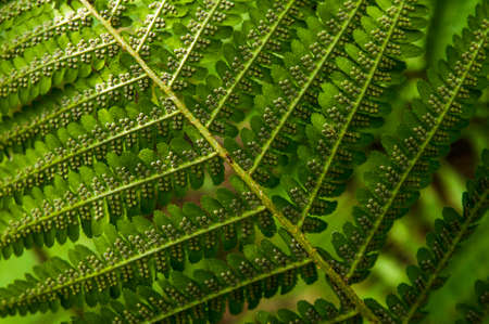 Background of tropical fern leaves close-up
