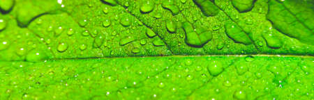 Water drops close up on green leaves of a tree Imagens