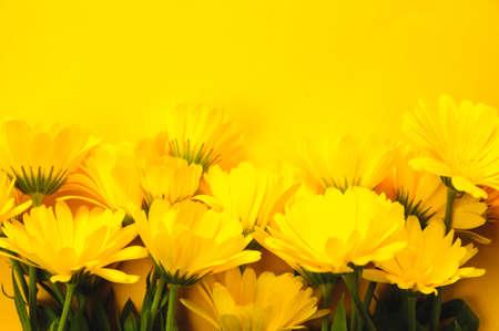 Yellow marigold on an yellow background Stockfoto