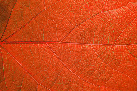 Background of green leaf plant close-up