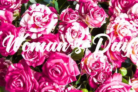 Pink rose varieties Fire Works. Top view