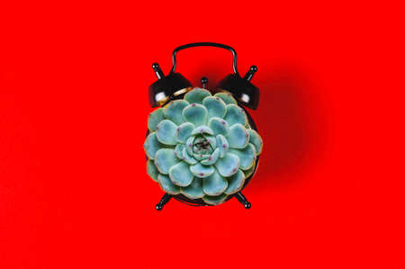 Vintage alarm clock and succulent on red background