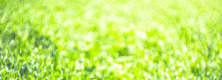 A green field of grass in drops of dew Banco de Imagens
