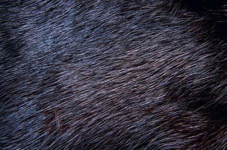 Background of dark mink fur. Close-up texture
