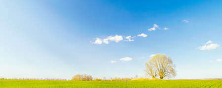 Spring landscape. A single tree in a green field against a blue sky with clouds