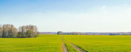 Spring landscape. Rural road in a green field against a blue sky with clouds
