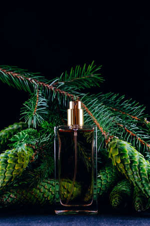 Perfume bottle on the background of pine branches with cones. Smell of Christmas concept