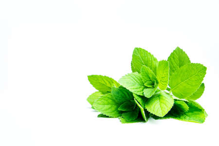 Peppermint leaves isolated on white background. Template for text or disign